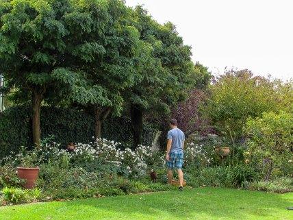 Carina's Gorgeous Garden