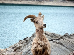 Banff National Park - Lake Minnewanka