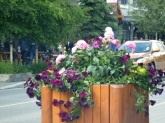 Banff - Flowers