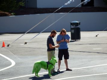 Seattle - Green Dog!