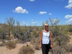 Saguaro National Park - VERY HOT