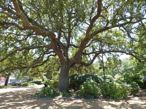 New Orleans - Louis Armstrong Park