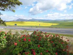 Dassiesfontein
