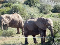 Addo Elephant National Park - Outside our Chalet
