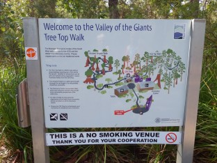 Valley of the Giants - Denmark, WA