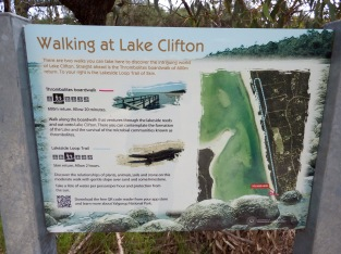 Lake Clifton - Thrombolites