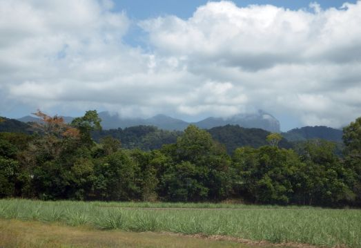 On the way to Cape Tribulation