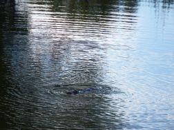 Australian Platypus Park
