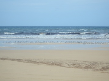 Fraser Island - Driving on 75 Mile Beach