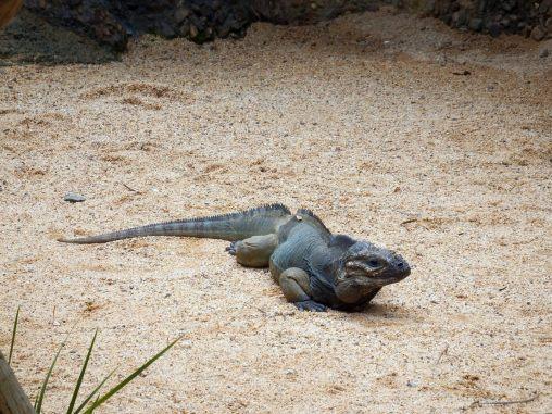 Australia Zoo - Lizards