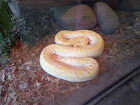 Australia Zoo - Anaconda