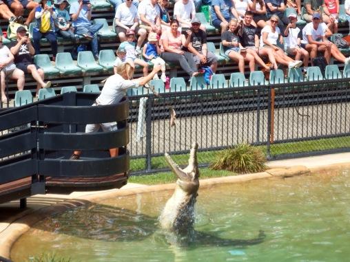 Australia Zoo - Crocodile