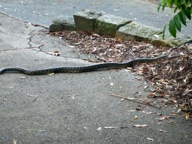 Brisbane - Botanical Gardens