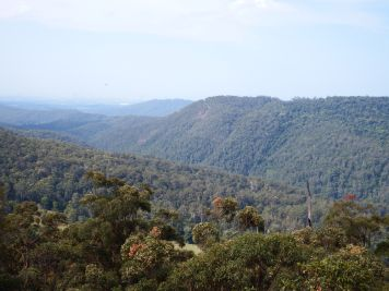 Tamborine Mountains, QLD